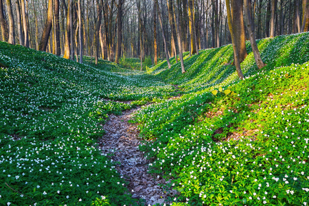 Wide path goes through huge meadows covered with white flowers as beads and misterious shadows lay on the ground. Stock Photo