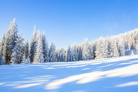 Mesmerizing white tree and white flatland around. Stock Photo
