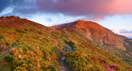 The wide path among the meadows, covered with blooming rhododendrons, leads to a high mountain with a house on top of it and a beautiful pink sunset.