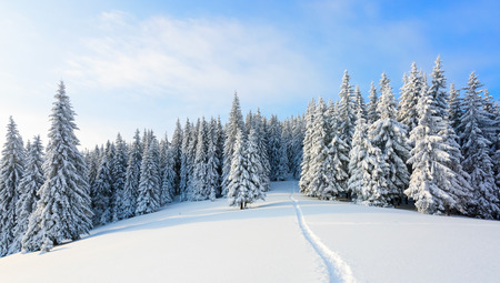 hoarfrost: The path leads to the snowy forest. Stock Photo