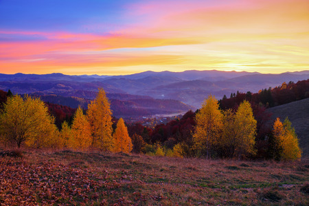 Young birch trees with yellow leaves surrounded by the mountains, where autumn woods covered with fog stretched, which seem to protect houses scattered on the hills, under the evening sky that the setting sun colored in yellow and orange shades.
