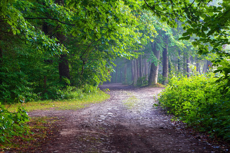 The wide road among giant trees leads to the fairy forest in haze. A fascinating view in the summer day. Stock Photo
