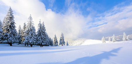 Far away in the high mountains covered with white snow stand few green trees in the magical snowflakes among fields on a beautiful winter. Stock Photo