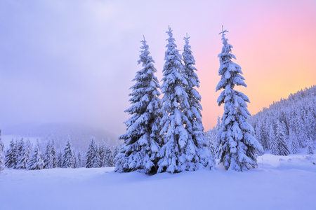 christmas grounds: Beautiful pink sunset shine enlightens the picturesque landscapes with fair trees covered with snow and high mountains. Stock Photo