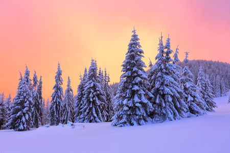Sunrise enlightens sky, mountain and trees standing in snowdrifts covered by frozen snow with yellow shine. Winter landscape for leaflets. Stock Photo