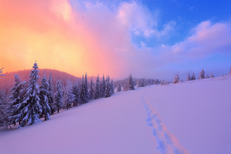 The marvelous landscape is opened to sunset and rose sky from the lawn full of nice snowy trees. The wide trail leads to the beautiful winter forest. Stock Photo