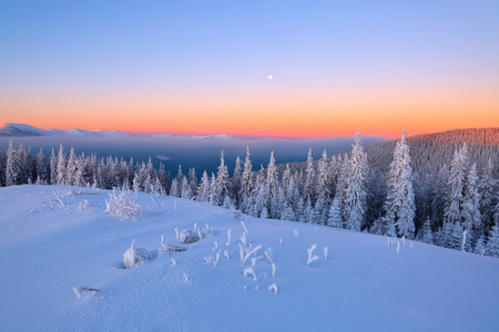 From the lawn, covered with snow, a panoramic view of the covered with frost trees, fog, tall, steep mountains, an interesting sunrise with a pink sky. Good winter day. Stock Photo