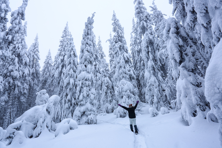 The girl in ski suite goes on the trail. On the lawn covered with snow the nice trees are standing poured with snowflakes in frosty winter morning. Beautiful winter background. Dreamy firs in the enchanted forest.
