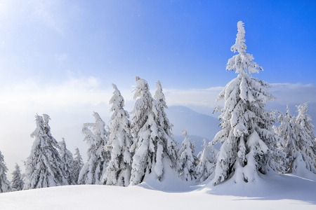 Spectacular panorama is opened on mountains, trees covered with white snow, lawn and blue sky with clouds. The game of light and shadow beautifully plays with volumes. Sunny winter day.