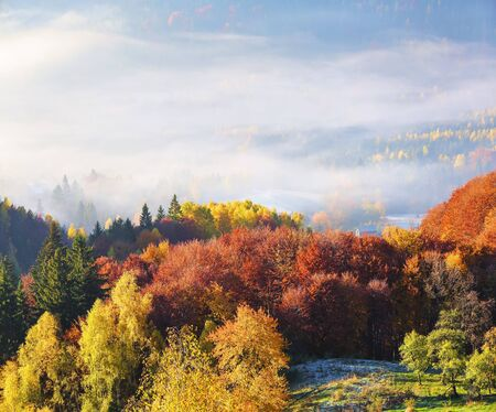 The lawn is enlightened by the sun rays. Majestic autumn rural landscape. Fantastic scenery with morning fog. Green meadows in frost. Picturesque resort Carpathians valley, Ukraine, Europe. Reklamní fotografie