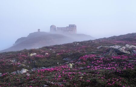 There is an abandoned observatory on the high mountain Pip Ivan, pink rhododendrons are growing on the lawn with the rocks. The morning fog spreads across. Mysterious summer day. Stock Photo