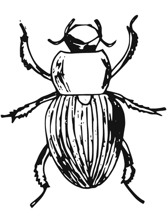 entomologist: hand-made illustration of a series of insects, beetle