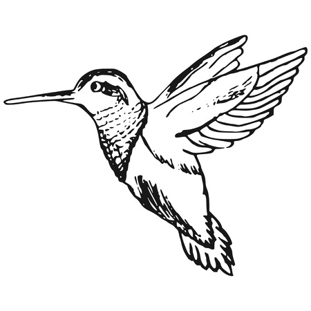 hand-made illustration of a series of birds, hummingbirds Vector