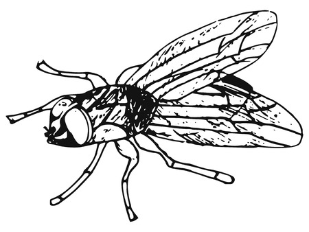 hand-made illustration of a series of insects, fly Vector
