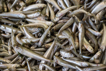 Freshly caught mediterranean sand smelt fishes or Atherina boyeri from silverside family in the box on the counter at the fish shop. Mediterranean sand smelt fishes background. Horizontal. Top view. Stock Photo