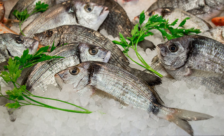 Striped bream fishes or Diploduc sargyc on ice for sale in the greek fish shop decorated with parsley. Striped bream fishes on ice and parsley. Horizontal. Close. Stock Photo