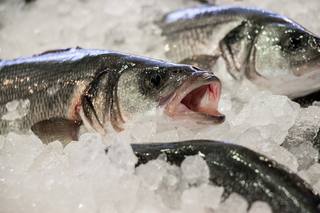 Fresco branzino o Dicentrarchus labrax, lavpaki sul ghiaccio nel negozio di pesce greco in fila per la vendita. branzino su ghiaccio in pescheria. Orizzontale. Daylight. Vicino. Archivio Fotografico - 66260036