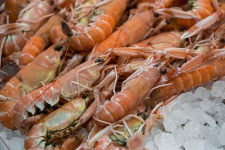 Freshly caught scampi or Norway lobster, Nephrops norvegicus on the counter with ice at the greek fish shop. Scampi on ice in fish shop for sale. Horizontal. Close up. Selective focus.