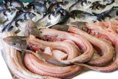Mustelus or smooth-hounds sharks for sale in the greek fish market.