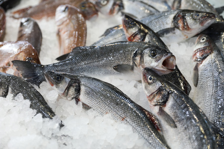 Fresh European seabass or Dicentrarchus labrax, lavpaki on ice in the greek fish shop for sale. Horizontal. Close-up.