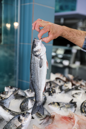 The seller holds in his hand fresh European seabass or Dicentrarchus labrax, lavpaki in the greek fish shop. Vertical. Close-up. Stock Photo