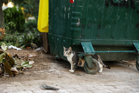 Homeless cat looking for food near the trash can.