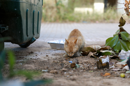 Homeless cat eating remnants of food next to trash can.