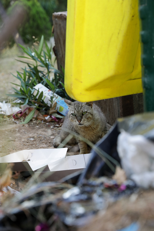 Stray cat looking for the remains of food near the trash can. Banco de Imagens
