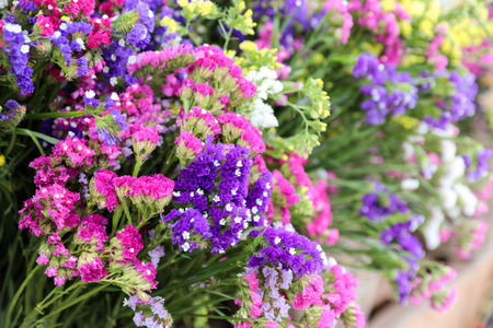 Variety of limonium sinuatum or statice salem, sea lavender flowers in pink, lilac, violet, purple colors in the garden shop.