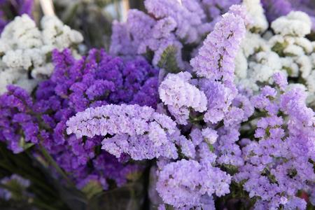 Beautiful limonium sinuatum, Petite Bouquet Series flowers in lilac, violet colors.