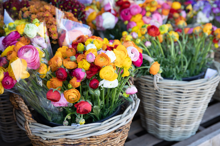 Baskets of colorful persian buttercup flowers or Ranunculus asiaticus bouquets in the flowers shop.