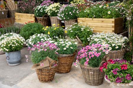 Lente verscheidenheid van ingemaakte madeliefjes in de bloemenbar.