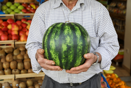 Ripe watermelon in the hands of the seller of the greek vegetable fruit shop. Watermelon season started. Horizontal. Close-up.