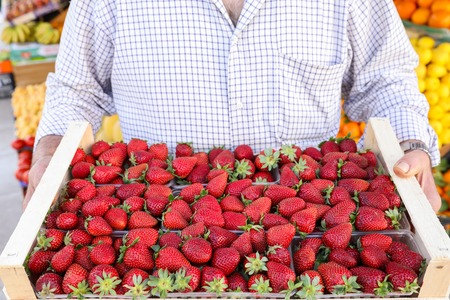Ripe strawberies box in the hands of the seller of the greek vegetable fruit shop. Horizontal. Close-up.