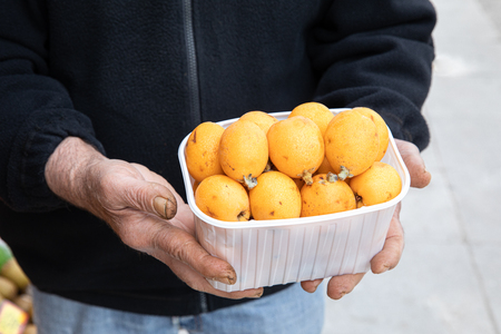Ripe loquat or Eriobotrya japonica fruits box in the hands of the seller of the greek vegetable fruit shop in May. Stok Fotoğraf