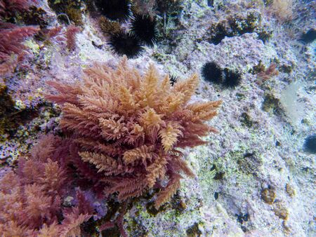 Underwater sea level photo of the Aponissos beach, Agistri island, Saronic Gulf, Attica, Greece. Reklamní fotografie
