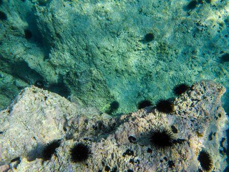 Underwater sea level  of the Aponissos beach, Agistri island, Saronic Gulf, Attica, Greece.