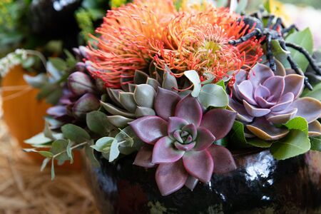 Autumn arrangement of succulents, chrysanthemum flowers and eucalyptus leaves at the greek garden shop in October. Horizontal. Close-up.
