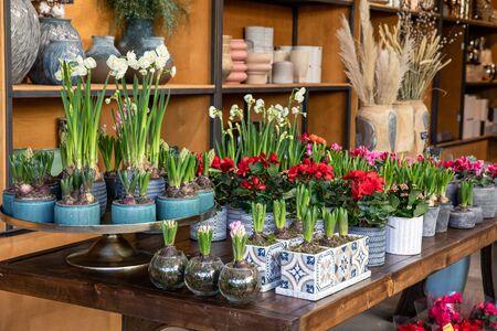 Variété de belles plantes en pot décoratives printanières telles que les bulbes de jacinthe, la jonquille blanche en fleurs et le bégonia rouge sur la table en bois du magasin de jardin de fleurs grecques. Horizontal. Banque d'images