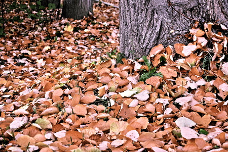 beautiful leaves in autumn park photo