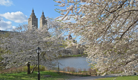 Spring in Central Park, Manhattan, New York  USA  版權商用圖片