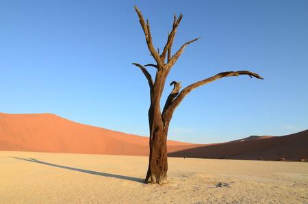 vlei: Dead Vlei in Namib desert, Namibia, Africa