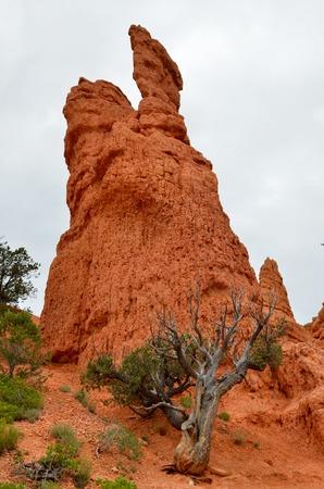 utah: Red Canyon, Utah, USA