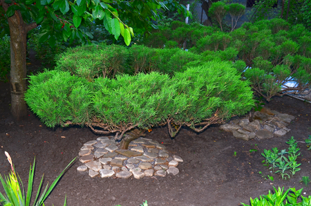 planted: Landscape design. Landscape design. Small trees are planted and grown in the Japanese style, it looks very interesting and original. Such trees will adorn any garden.
