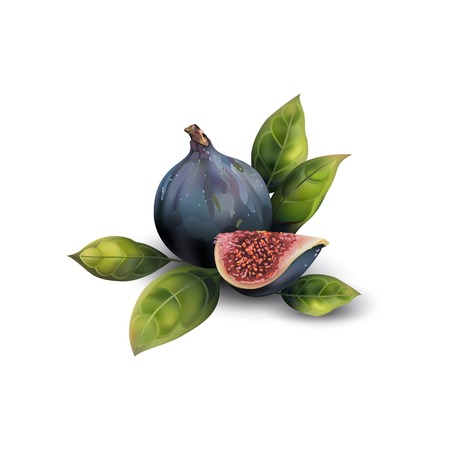Realistic dark blue figs on a white background. Realistic halves of figs.