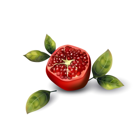Realistic pomegranate with leaves on a white background. Illustration