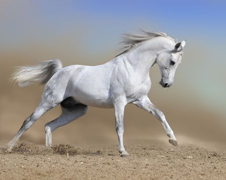 white horse stallion runs gallop, collage paint Stock Photo