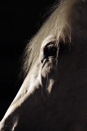 humility: cavallo bianco di sagoma nel buio