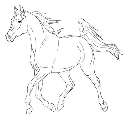 drafje: Arabische paard illustratie geà ¯ soleerd op wit