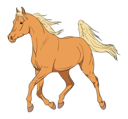 Arabian horse illustration isolated on white illustration